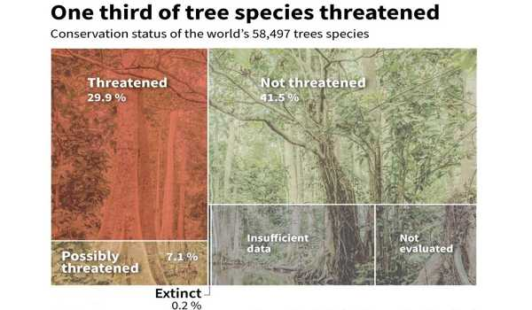 Approximately-a-Third-of-the-Worlds-Tree-Species-are-Endangered-1