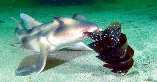 """Baby Shark Born in Female-Only Tank may be Species' First """"Virgin Birth"""""""