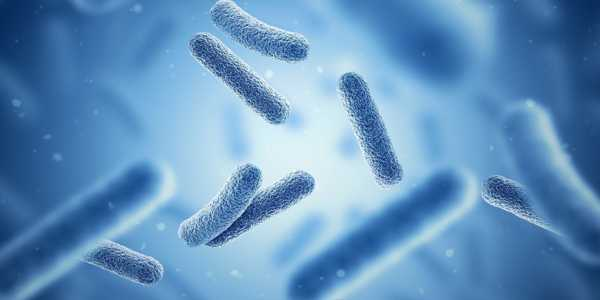 Bacteria-could-be-Crucial-for-Energy-Storage-and-Biofuel-Production-1
