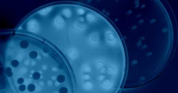 Bacteria could be Crucial for Energy Storage and Biofuel Production