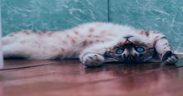Cats have Seven Personality Traits, Impawtant Study Finds