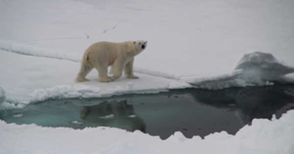 Climate Change Poses a Threat to the Polar Oceans' Abundant Food Webs