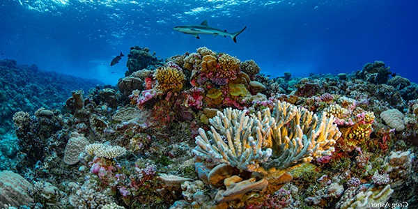 Coral-Reefs-may-be-Saved-if-Reforestation-is-Undertaken-1