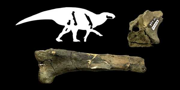 Dinosaur-Evolution-in-Eastern-North-America-is-revealed-through-Peabody-Fossils-1