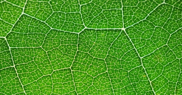 Insight into Photosynthetic Power Generation could lead to more Robust Crops