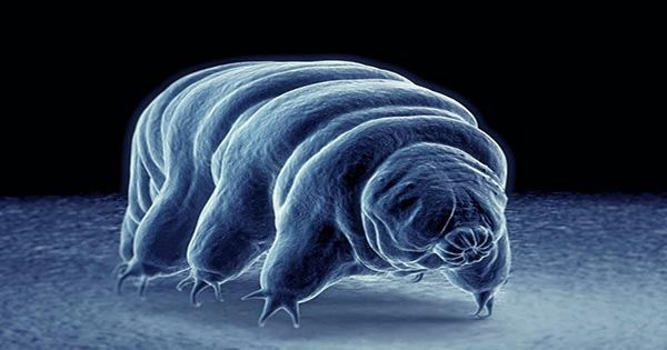 Secrets of how Tardigrades Strut Revealed in New Microscopic Footage