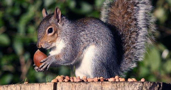 Squirrel Parkour could Inspire Search and Rescue AI Robots