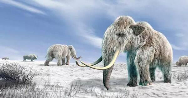 Start-Up Secures $15 Million to Create Mammoth-Elephant Hybrid