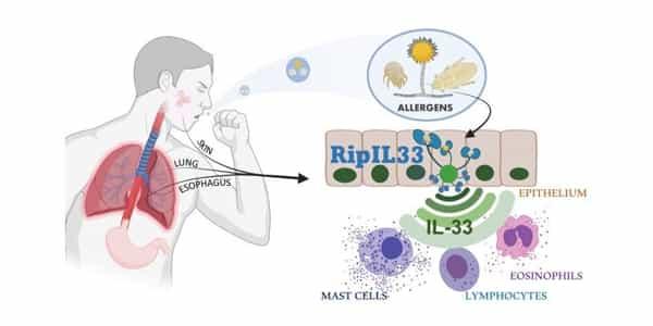 Study-reveals-how-Bodys-Type-2-Innate-Immune-Response-System-Works-1