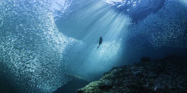 Transform-Discovery-and-Monitoring-of-Marine-Biodiversity-1