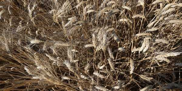 Tunisia-Sows-Seeds-of-Hope-in-the-Fight-against-Global-Warming-1