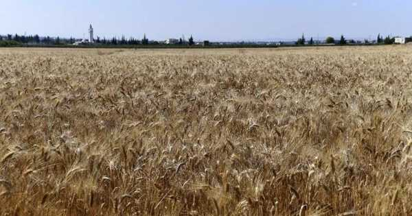 Tunisia Sows Seeds of Hope in the Fight against Global Warming