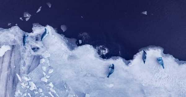 Understanding Past Changes in Antarctic Ice could help Predict Future Changes