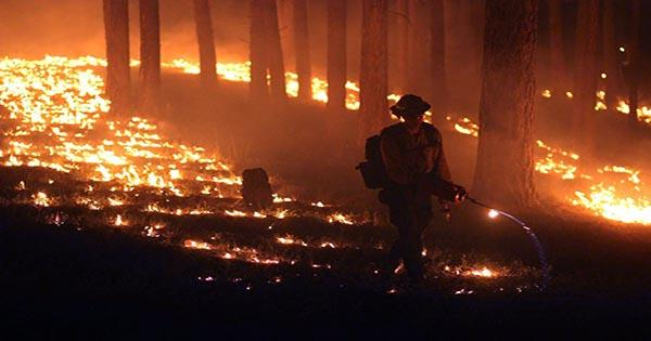 Wildfires Burn through Forest Used to Offset Climate Crisis
