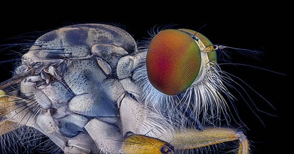 Winning Images of Nikon's Small World Competition 2021 are Mind-Blowing
