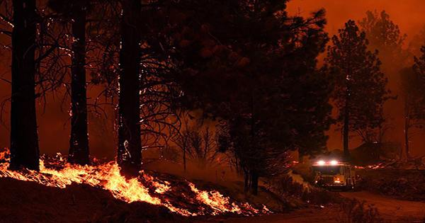 World's Largest Tree Wrapped in Fire-Proof Blanket as Wildfires Rage Closer