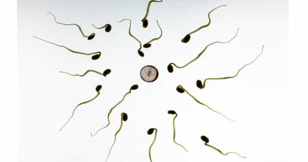 A-New-Male-Contraceptive-Pill-Compound-has-been-Developed-1